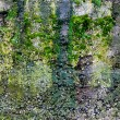Green moss on the stone — Stock Photo
