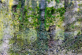 Green moss on the stone — Foto Stock