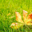 Autumn leaf on green grass. — Photo
