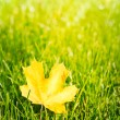 Autumn leaf on green grass. — Stock Photo #32409915