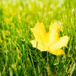 Autumn leaf on green grass. — ストック写真