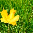 Autumn leaf on green grass. — Stock Photo #32409947