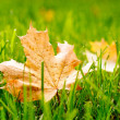 Stock Photo: Autumn leaf on green grass.