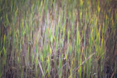 Grass in morning sunlight - abstract background. — Photo