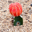 Stock Photo: Close up of cactus.