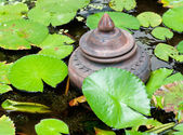 Jar in der Lotus-Pfund. — Stockfoto