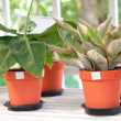 Stock Photo: Indoor plants in flowerpots