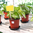 Indoor plants in flowerpots — Stock Photo #19841653