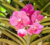 Bela flor de orquídea. — Foto Stock