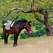 Foto de Stock  : Brown horse with rider equipment .