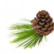Pine cones. — Stock Photo