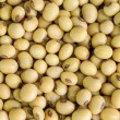 Stock Photo: Soy bean.