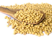 Soy bean. — Stock Photo