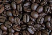 Sementes de grãos de café — Fotografia Stock