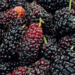 Stock Photo: Mulberry