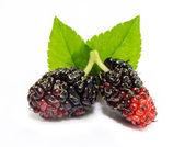 Mulberry — Stock Photo