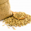 Paddy rice seed. — Stock Photo