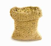 Paddy rice seed. — Stock Photo