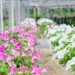 Flowers pot nursery . — Stock Photo #35578515