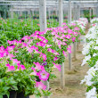 Flowers pot nursery . — Stock Photo