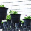 Flowers pot nursery . — Stock Photo #35578653