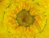 Slaměné květ. — Stock fotografie