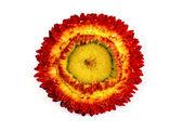 Flor de palha. — Foto Stock
