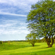 golfe putting green — Foto Stock