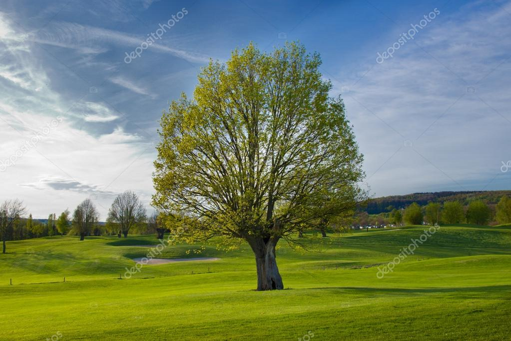Golf putting green — Stock Photo #14550079