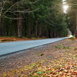 Country road into forrest — Stock Photo