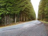 Landweg in forrest — Stockfoto