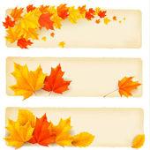 Drie herfst banners met kleurrijke bladeren vector — Stockvector