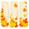 Stock Vector: Three autumn banners with colorful leaves