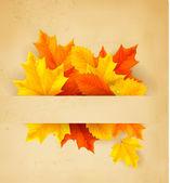 Las hojas de otoño colorido en un papel viejo — Vector de stock
