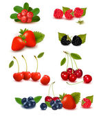 Big group of fresh berries Vector illustration — Stock Vector