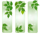 Three nature banners with green fresh leaves . Vector illustration. — Stock Vector