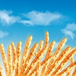 Ears of wheat in front of blue sky. Vector. — Stock Vector