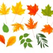 Stock Vector: Set of colorful autumn leaves. Vector.