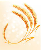 Ears of wheat background. Vector. — Stock Vector