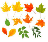 Set of colorful autumn leaves. Vector. — Vector de stock