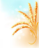 Ears of wheat in front of blue sky. Vector illustration. — Stock Vector