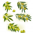 Set of backgrounds with green olives. Vector illustration. — Imagens vectoriais em stock