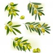 Set of backgrounds with green olives. Vector illustration. - Stock Vector
