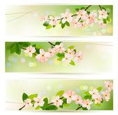 три природы баннеры с цветущие дерево бранч с весны фло — Cтоковый вектор