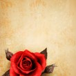 Big red rose on old paper background. Vector. — Stock Vector #24886067