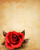 Big red rose on old paper background. Vector. — Stock Vector