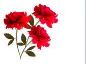 Rekreační zázemí s červeným tři růže. vektor — Stock vektor