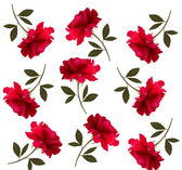 Holiday pattern with red beautiful roses. Vector — Stock Vector