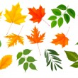Big collection of colorful leaves. Vector illustration. — Stock Vector
