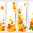Set of autumn banners with colorful leaves. Back to school. Vect — Stock Vector #29510327